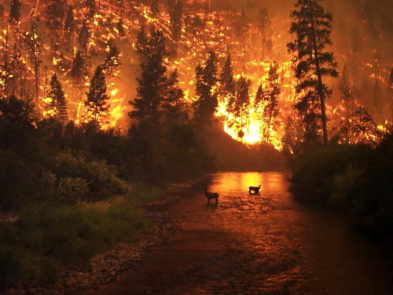 Les marques australiennes se mobilisent contre les incendies