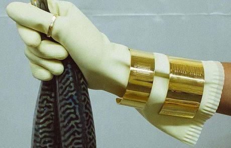 In Gold we trust : des bijoux de luxe avec les codes du low cost