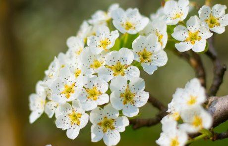 Chanel veut planter 600 arbres pour soutenir le marché de la fleur d'oranger