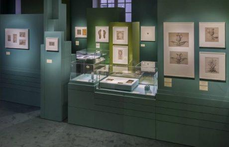 Exposition Chaumet «Dess(e)in de nature»