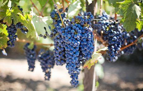 LVMH rachète le vignoble Château du Galoupet