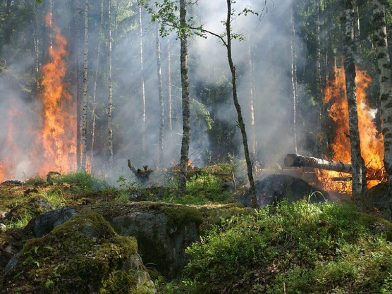 LVMH offre 10 millions d'euros pour lutter contre les feux en Amazonie