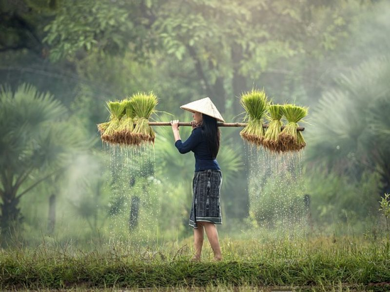 L'Union européenne et le Vietnam signent un accord visant à simplifier les échanges commerciaux