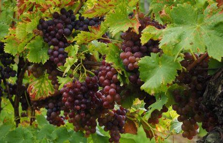 Vin et digital : les grands Châteaux bordelais présents sur le net