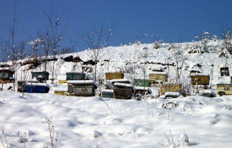 Guerlain et l'UNESCO s'associent pour les abeilles