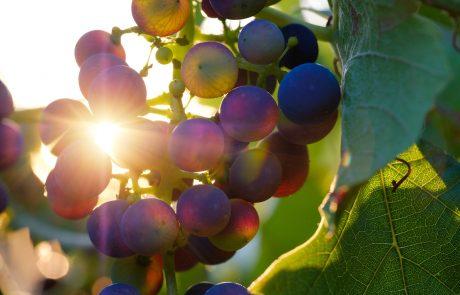 Le nouveau vin de Diesel Farm se veut «non genré»