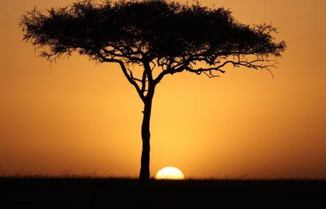 Roberto Cavalli s'associe à Treedom au profit des arbres et de la planète