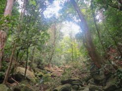 LVMH et l'UNESCO dévoilent un projet de lutte contre la déforestation